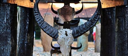 Hunting trophy. Image courtesy of Pixabay