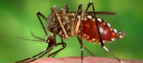 Problemas oculares relacionados com o zika vírus