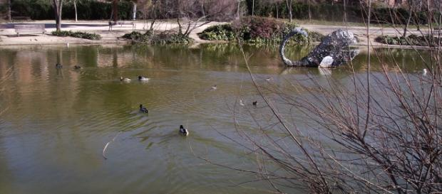 Ánades en un parque de las Rozas (Madrid)