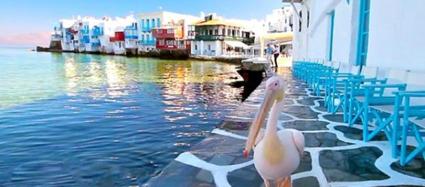 Pelicano Petros, símbolo da ilha grega de Mykonos