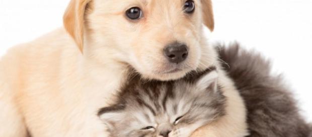 Perros o gatos, ¿cuál de ellos te quiere más?