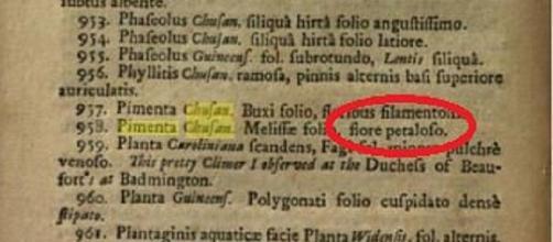 'Petaloso' in un testo di botanica del 1693