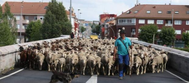 Cada rebaño con su pastor, va por el mundo