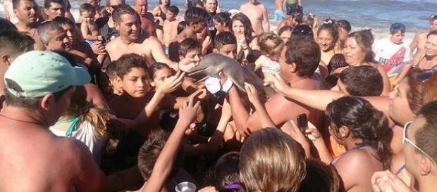 Il delfino raccolto sulla spiaggia Argentina