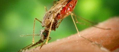El temible virus zika es imparable