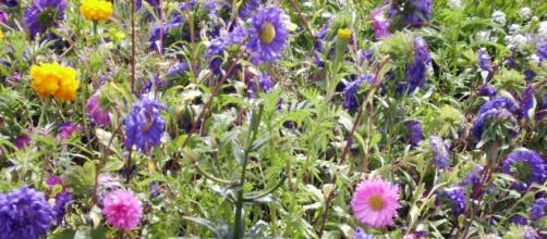 Diversidad botánica. La evolución de la vida