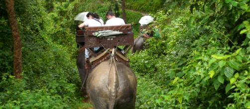 Excursión turística de elefantes en Tailandia.