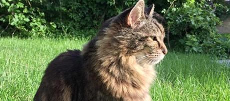 Corduroy, il gatto più vecchio del mondo