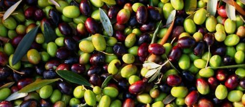 Olio di oliva, minacce da import e contraffazioni