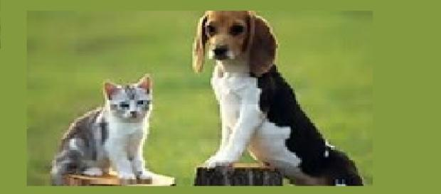 Es mejor tener un perro que un gato
