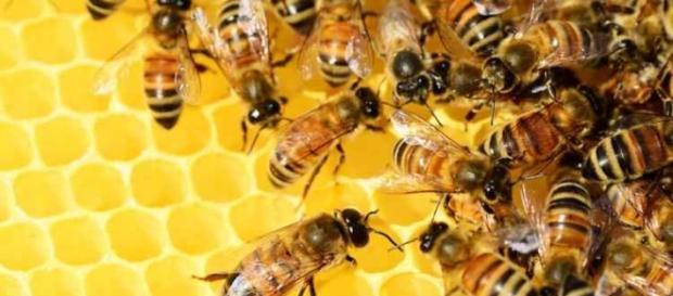 A abelha é essencial para a humanidade.
