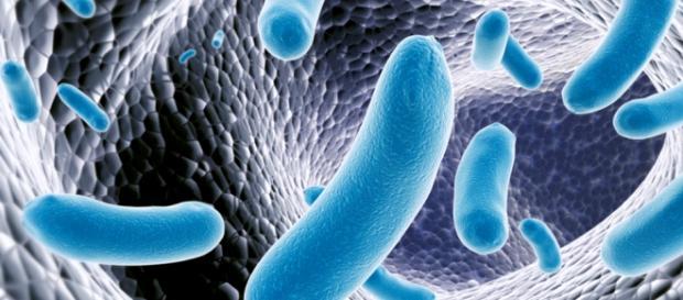 Salmonella Typhi, responsável pela febre tifoide.