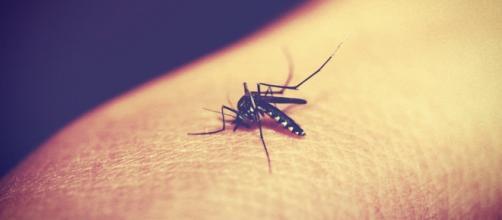 Virus Zika in Italia con zanzara tigre?