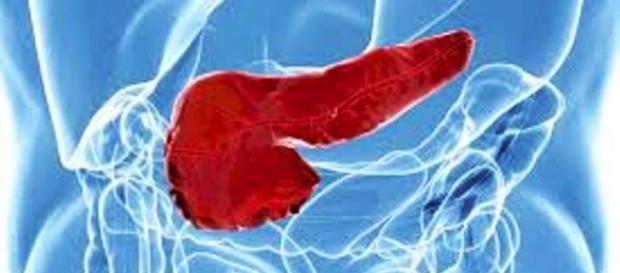 Komórki trzustki komunikują się ze sobą