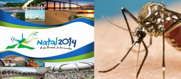 Zika teria chegado ao país na Copa