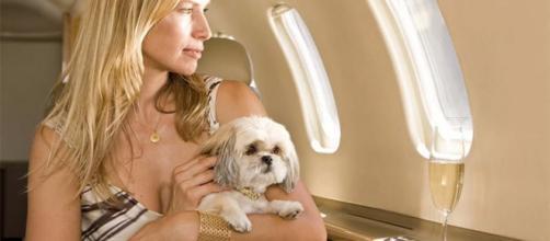 Problemas para poder viajar con animales