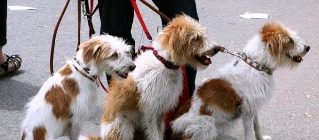 Los perros, viajarán en el último vagón del Metro