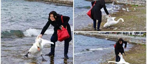 Mulher sufocou o cisne que morreu após as fotos