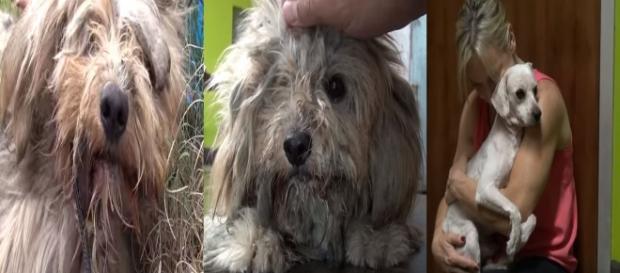 Cãozinho emocionou o mundo com seu trauma e amor