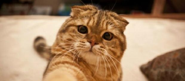 Recuerda que los gatos adoran los selfies.