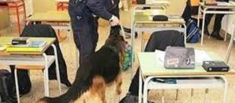 Cani antidroga all'opera tra i banchi di scuola.