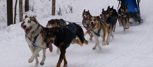 Iditarod race Alaska [Photo: Nat Wilson/Flickr CC]