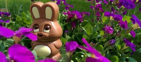 Conigli di cioccolato per dare fondi a scuole
