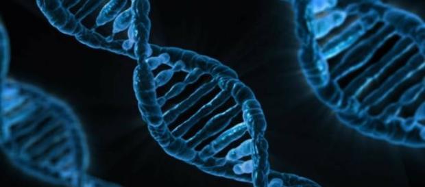 Conocer el riesgo genético no mejora la salud