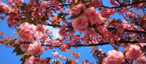 Equinozio di primavera: 20 marzo 2016