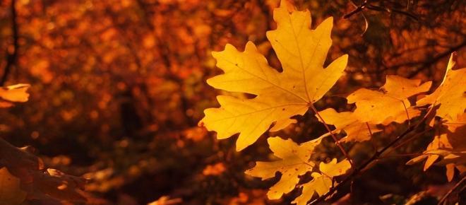 El otoño, un periodo de mucho trabajo para todos los signos