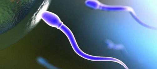 Le moteur du sperme vers l'oeuf
