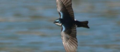 Swallow in spring; spring produces fewer allergies than autumn
