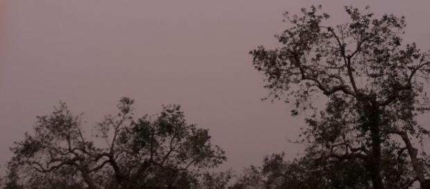 Atmosfera desertica sul Salento.