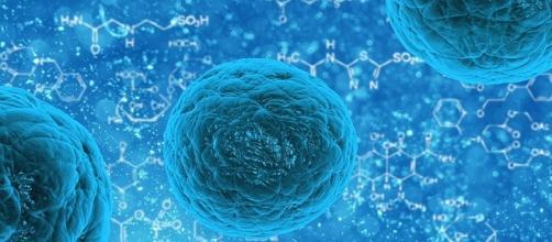 la Consulta e le cellule embrionali