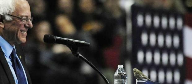 """O famoso pássaro a """"assistir"""" ao comício de Sanders"""