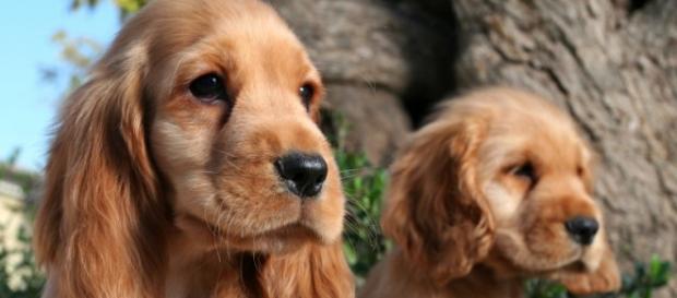 Veja doenças mais comuns para cada raça do seu cãozinho