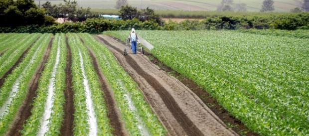 Ayudas muy mal distribuidas en el sectot agrícola