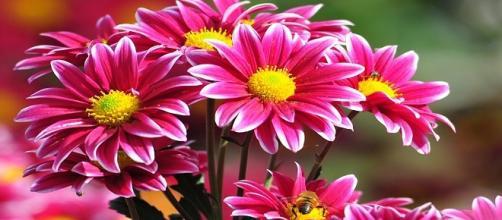 flores que en rusia se dan pares