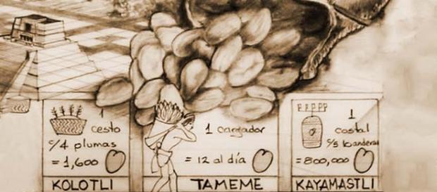 Reconocerán importancia del cacao para México