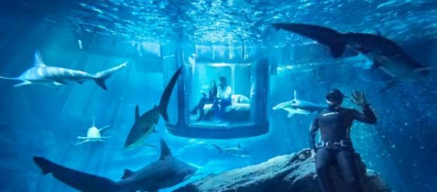 The Shark Aquarium on AirBnB (theverge)