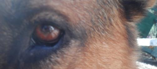 El maltrato animal también es un delito.