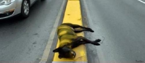 Tramo de carretera pintada y el perro