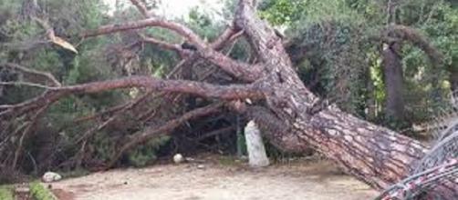 Messina, tragedia sfiorata per crollo di alberi