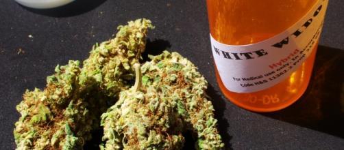 Medical marijuana [Photo via Mark/Flickr CC]