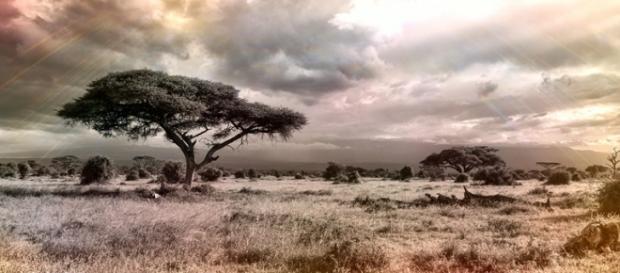 Africa. Image courtesy of Pixabay