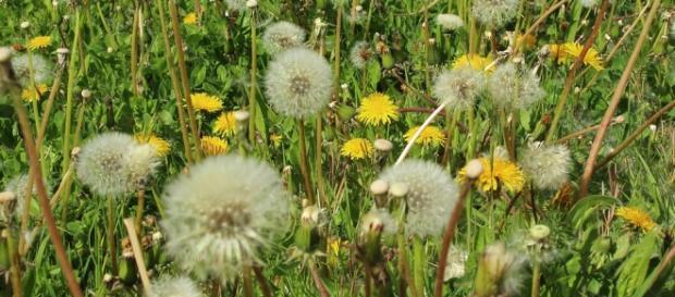 En primavera, proliferan los casos de alergias