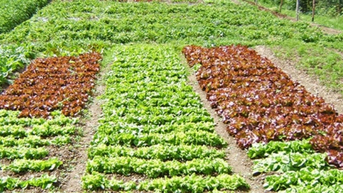 Cosa Piantare A Febbraio l'orto di marzo, cosa piantare