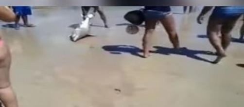 Banhistas mataram tubarão ao retirá-lo do mar