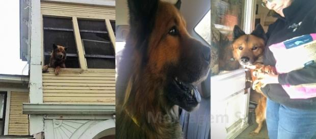 Fotos: Arquivo The Backyard Dog Project