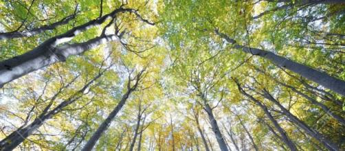 Si vive più a lungo a contatto con la natura